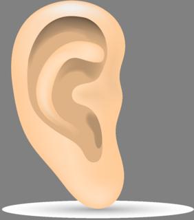 耳.png