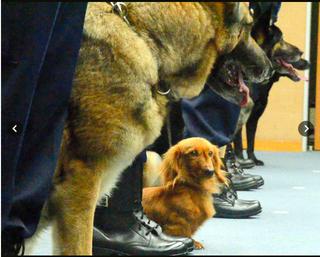 警察犬.png